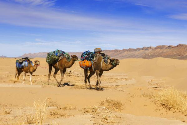 Διασκέδαση και ψώνια στην Τυνησία